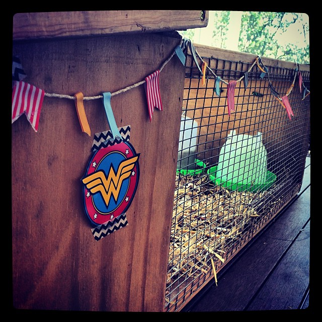 Setting up home for Wonder Woman (our mummy chook) and her soon to hatch chicks . Two days to go. Fingers crossed!