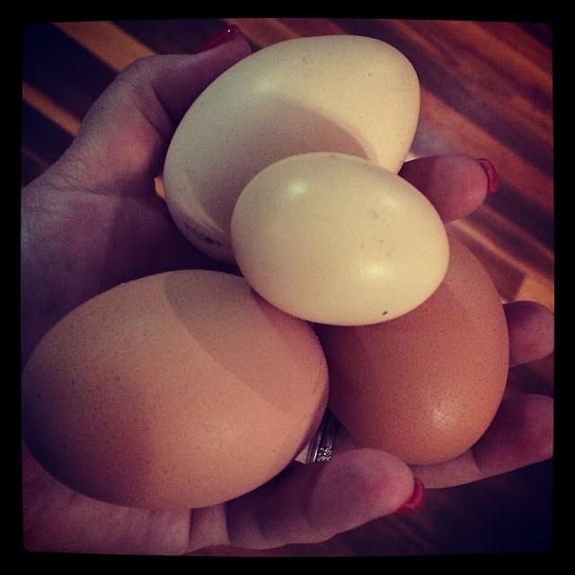 Eggs again!