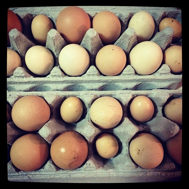 The weekend collection. Yeah I know another egg photo! But I do HEART my chickens xx
