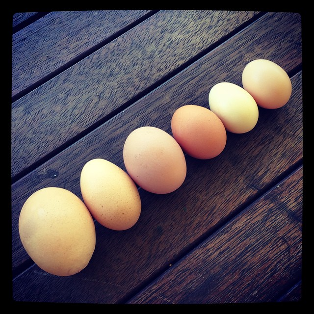 From our Hens. It's alway a surprise to collect the eggs.