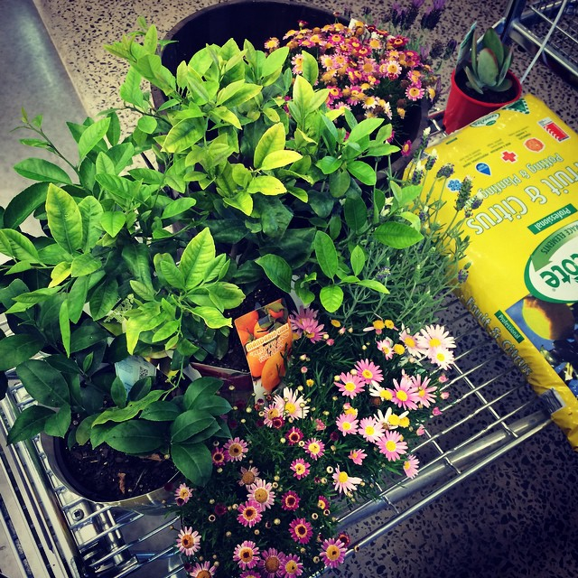 I will not kill these plants!