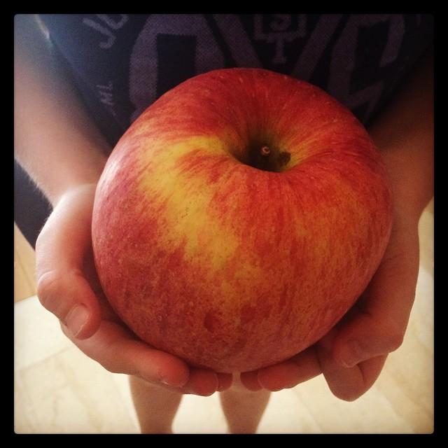 Enormous Fuji apples.....so good!!@madog71 @clr0210
