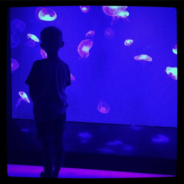 Bangkok Sea Life Ocean - Jelly Fish Room