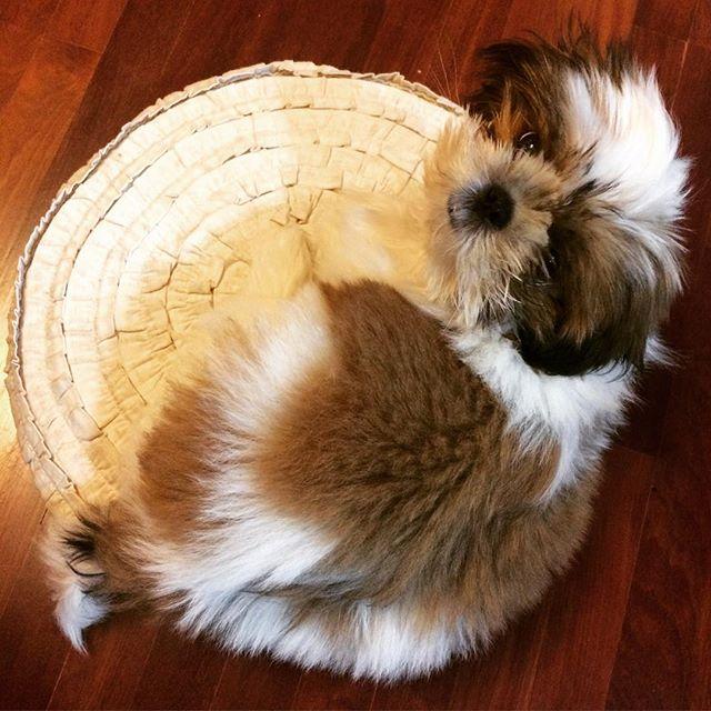 She loves a cushion