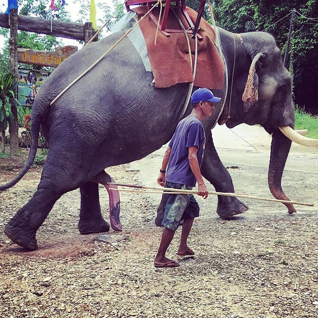 Just because I'm a child I had to post this. This elephant has five legs