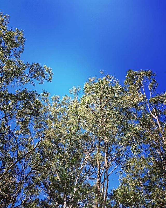 Blue skies and gum trees. It's so lovely to be home ️