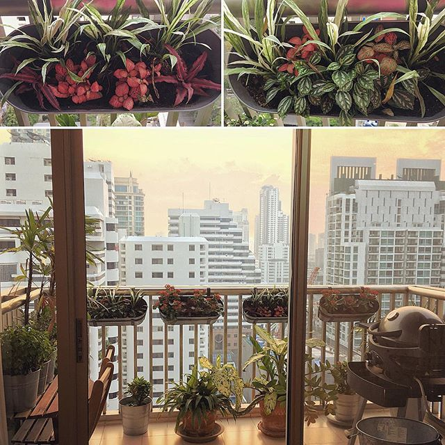 We finally have our little garden on the balcony. We spent a lovely morning at the plant market with @heyjude_40. It is really lovely to have some green. The pots had been hanging empty for at least 18 months. Now I just have to keep them alive