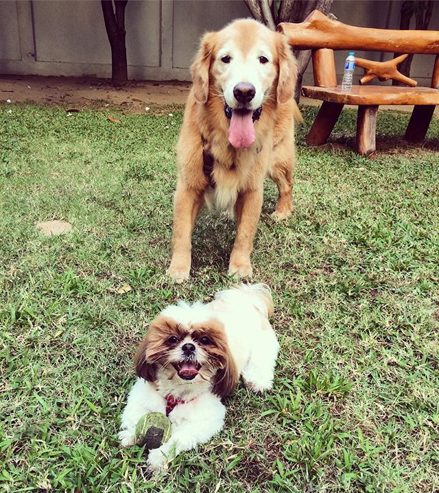 This is another one of Penny's new friends. This is Jack. Penny steals his tennis balls