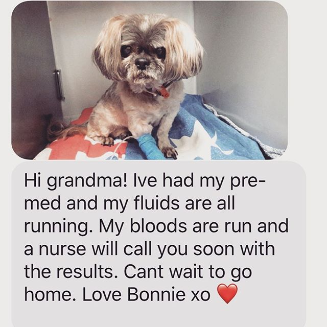 Our beautiful girl Bonnie in Australia is having an operation today. She is 15 and wasn't up to the move to Thailand. She now lives with my Mum and Dad. They totally spoil her......she sleeps on the bed We miss her ️️️