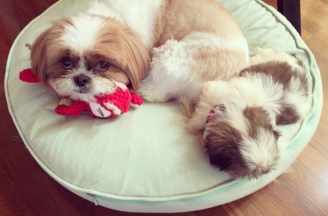 Penny & Molly