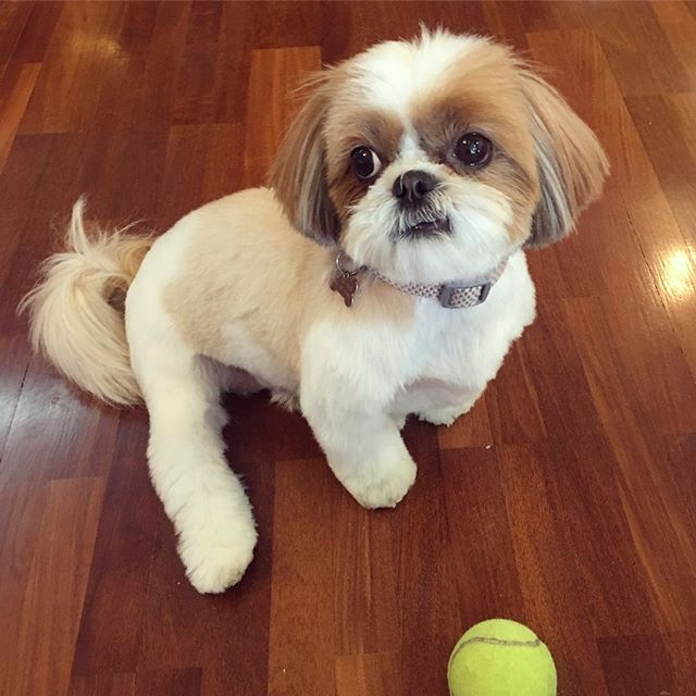 Haircut day - Penny ️